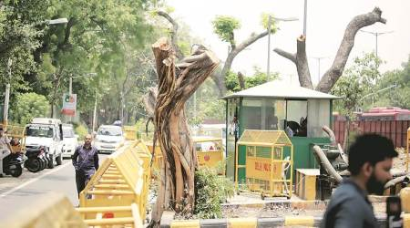 Delhi: Not enough compensatory plantation, Hussain revokes permission granted to cut trees