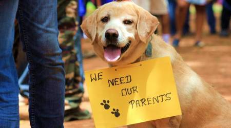 dog days, dog new laws, dog bengaluru laws, dogs in bengaluru, dogs bengaluru, licensing law bengaluru, indian express, indian express news