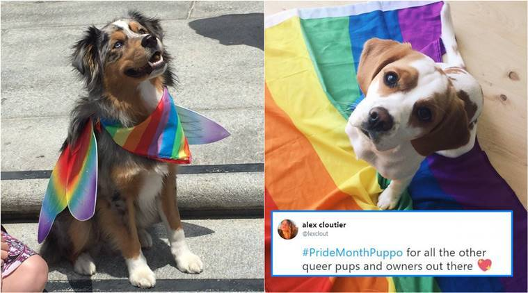 pride month, pride parade, dogs rainbow flags, dogs viral picture, pride month dogs picture, indian express, indian express news