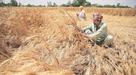 Punjab: Agriculture experts meet today