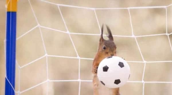 Fifa world cup, Fifa world cup 2018, Fifa world cup Russia, Fifa world cup 2018 Russia
