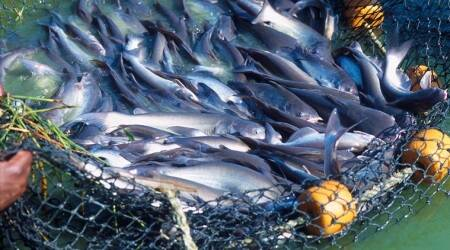 Goa: Deputy Speaker Michael Lobo opposes ban on fish import