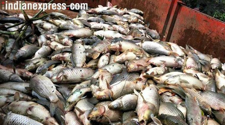Manipur bans sale of imported iced-packed fish