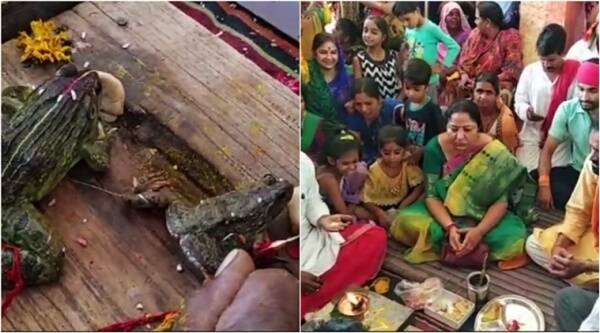 frogs married, frogs married minister attends, minister attends frogs wedding, bizarre Indian rituals, Bizarre India news, Bizarre frog weddings, animal weddings, bizarre animal wedding news viral, bizarre frog wedding news viral, Indian express, Indian express news