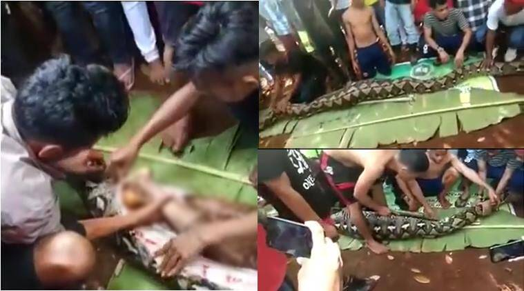 python, indonesia, python eat human, python swallow woman, python eat human alive, viral video, scary videos, indian express