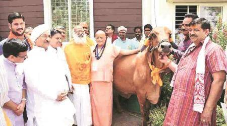 Madhya Pradesh: 'Miffed' cow protection board chief elevated to Cabinet rank