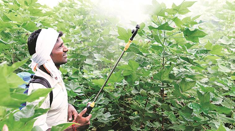 Deaths of last year on its mind, Maharashtra steps up pesticide vigil