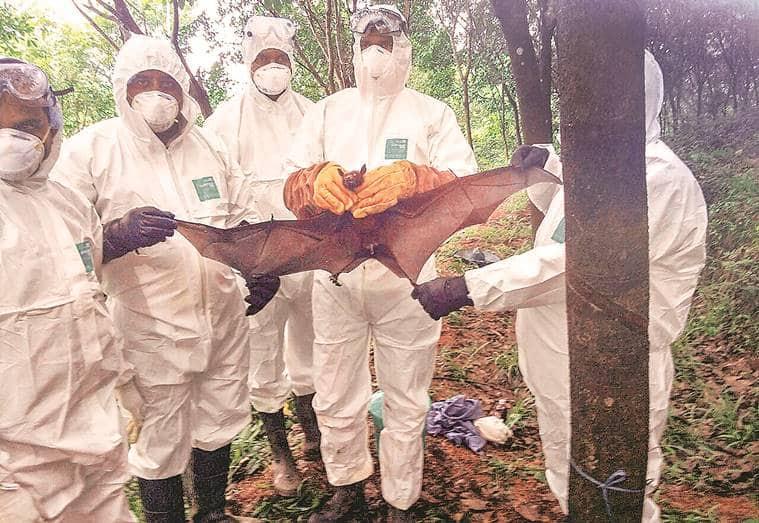 nipah outbreak in kerala