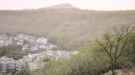 Protecting Pune's Urban Forests: A decade of increasing encroachments, stuttering efforts and withheld funds
