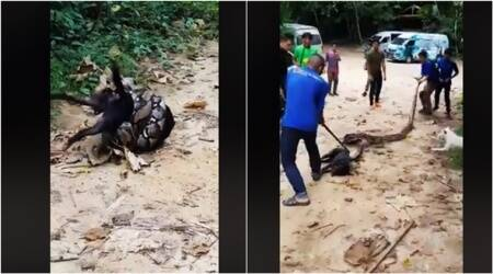 DISTURBING video of a huge snake strangling a dog goes viral; but there's a TWIST