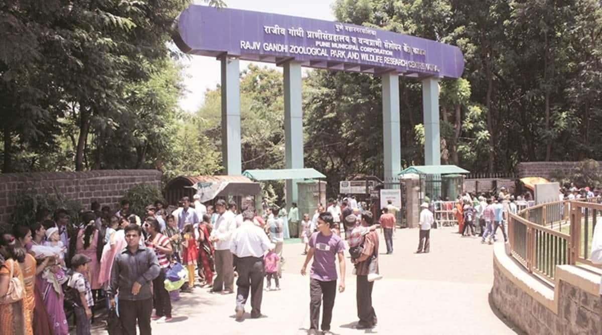 Pune news, Pune zoological park, Rajiv Gandhi Zoological Park, blackbucks in pune, stray dogs killing blackbuck, blackbuck case, pune zoological park blackbuck killing, indian express latest news