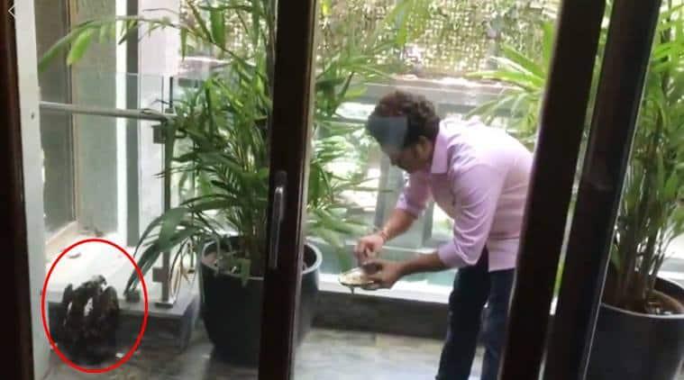 Sachin Tendulkar, Sachin Tendulkar bird rescue, Sachin Tendulkar helps bird, Sachin Tendulkar rescues kite, Sachin Tendulkar bird in home balcony, Sachin Tendulkar videos, viral videos, indian express
