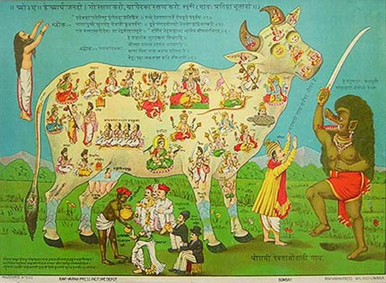 cow, cow in India, cow lynchings in India, BJP, Narendra Modi, BJP and cow, cow and Hindu, cow and Hindutva politics, Hinduism, Hinduism and cow, cow lynching news, India news, BJP news, Indian Express