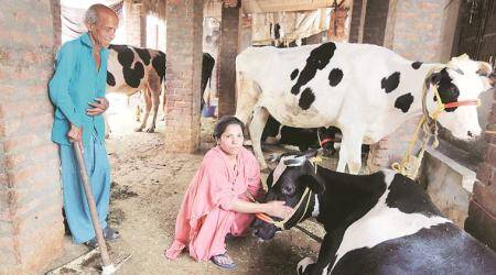 Punjab woman: Caring for cows does not make me a lesser Muslim