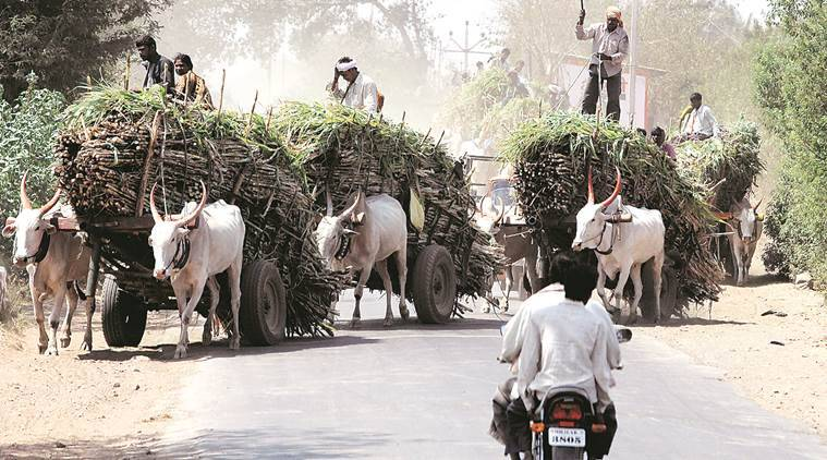 Pune: Sugar millers oppose stoppage of subsidy scheme for harvesters