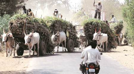 The ailing sugar sector and fall of Solapur'sbank