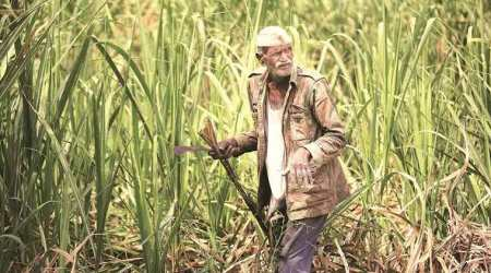 Govt hikes sugarcane price by Rs 20 per quintal to Rs 275