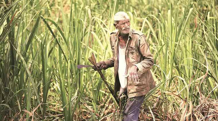 Karnataka: Sugarcane farmers call off protest after CM Kumaraswamy's assurances