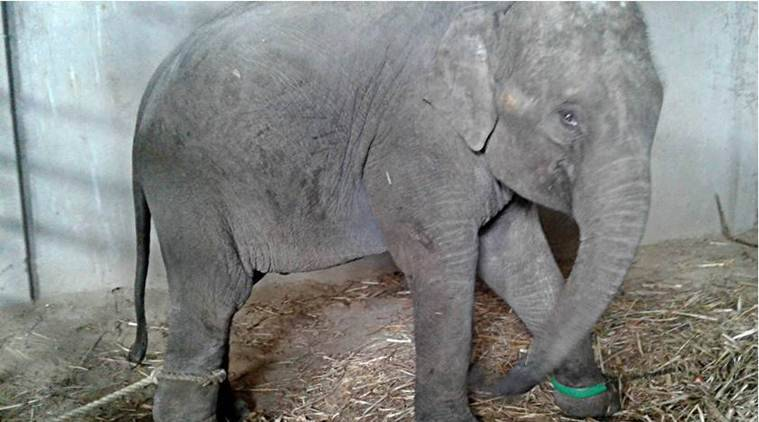 NGO initiates campaign to rescue elephant held in captivity, plans to curb trafficking