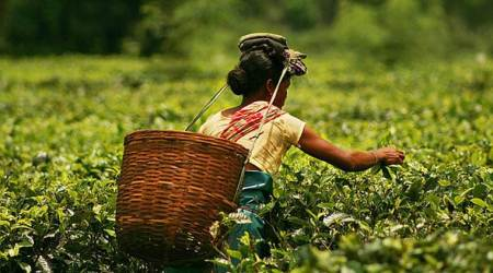 Assam to give financial assistance to pregnant tea garden workers: CM SarbanandaSonowal