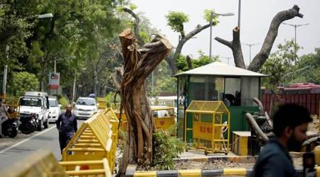 Delhi: Centre, AAP in blame game over permission for felling of trees in South Delhi