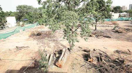 Civic body spent Rs 150 crore in 3 years to remove trees, reveals RTI