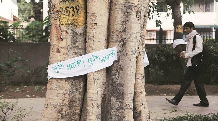 Delhi: Will rework project design to avoid cutting more trees, says Urban Affairs Minister Hardeep Puri