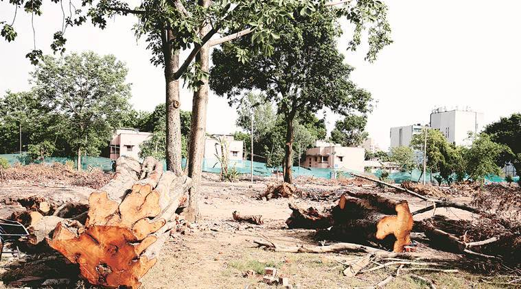 How many trees are being felled in Delhi, where, and why?