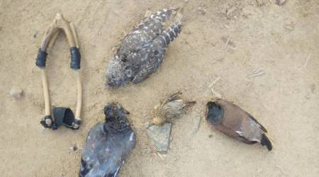 Eight tribal youths stripped, detained for hunting pigeons in Gujarat