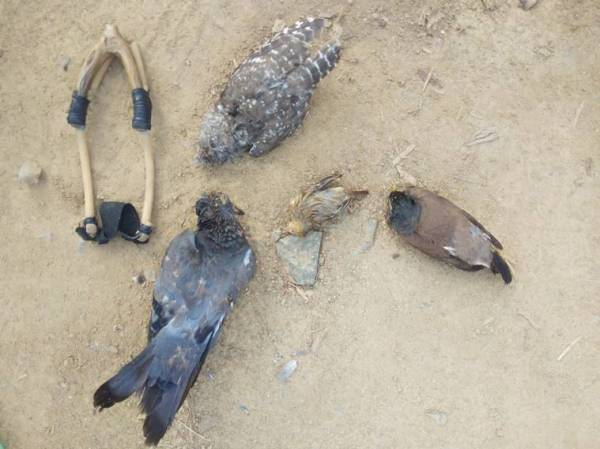Eight tribal youths stripped, detained for hunting pigeons