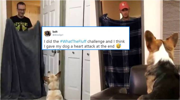 What The Fluff Challenge, what is What The Fluff Challenge, dog funny videos, hiding from dogs, funny pet videos, indian express, indian express news