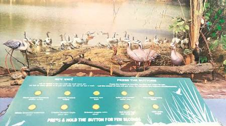 Chandigarh: New 3D technology draws bird lovers in large numbers