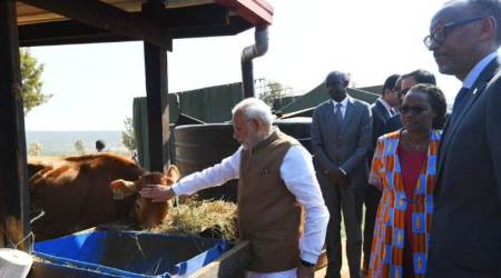 PM Modi gifts 200 cows to Rwandan village under African nation's economic development project