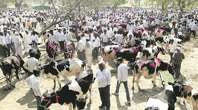 cattle trade rules, cattle trade laws, lynching cases in india, alwar lynching, cattle slaughter, cow slaughter, Prevention of Cruelty to Animals (Regulation of Livestock Market) Rules, nitin gadkari, ministry of environment and forests, Animal Welfare Board of India