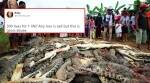 Crocodile kills Indonesian man, villagers slaughter around 300 in revenge