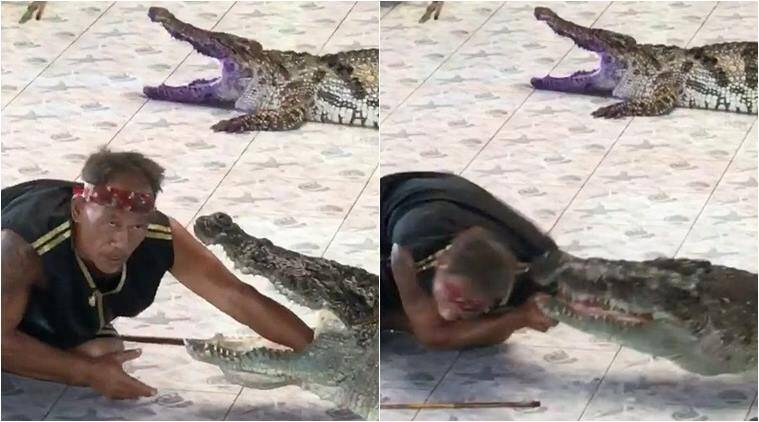 crocodile attack, crocdile bite man, crocodile bite man hand, thailand crocodile park , zoo handler crocodile attack, Phokkathara Crocodile Farm, viral videos, indian express