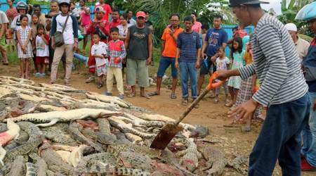 WATCH: Indonesian villagers kill nearly 300 crocodiles in revenge attack