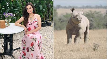 Rhinoceros named after Dia Mirza