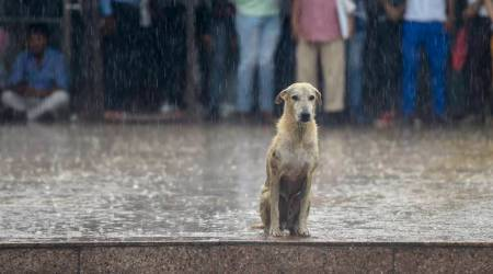 dog meat, dog meat soup, North Korea, South Korea, dog meat in summers, eat dog meat to beat the heat, World News, Indian Express