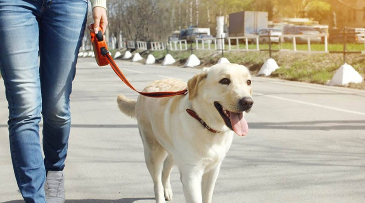 Army dogs, Army labradors, Army dogs Jammu and Kashmir, Army labradors Jammu and Kashmir, India news, Indian Express