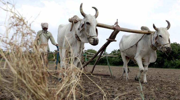 Dry June hits kharif, sowing area 25% less than normal