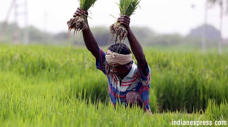 farm income, agricultural income, nabard, nabard survey, national agricultural survey, Niti Aayog, indian farmers, farm distress, agriculture in india, indian express