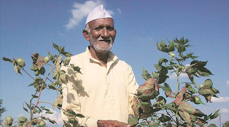 India's genetically modified crop area fifth largest in world