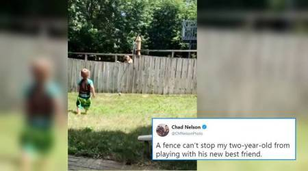 This child playing fetch with a dog through a fence will leave you smiling