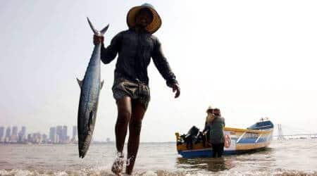 Fishing Ban, Fisherman condition in TN, Tamil Nadu coast, Tamil Nadu, Fishing ban in Tamil Nadu, Fish production in TN, TN fisherman, TN Govt, Indian Express