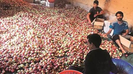 Himachal: Truckers' strike hits apple producers, mandis wear a deserted look
