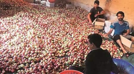 Himachal: Truckers' strike hits apple producers, mandis wear a desertedlook