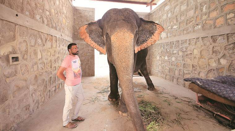 The elephant in the room: A day in the life of Haathi Gaon in Jaipur