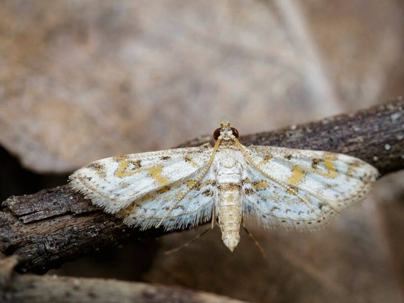White butterfly Moth Insect Animal.