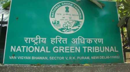Jalandhar: NGT orders probe into felling of trees along Bist-Doaba Canal